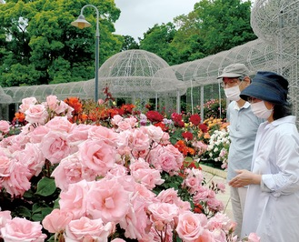 春バラを観賞する来園者たち(5月11日撮影)
