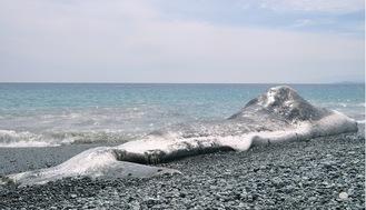 海岸に打ち上げられたクジラの死骸(9月13日撮影)