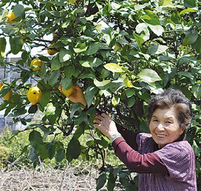 小田原柑橘倶楽部を選定