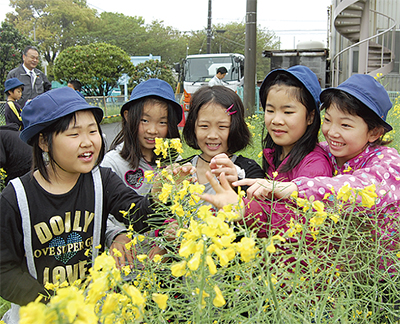 菜の花でエコ活動