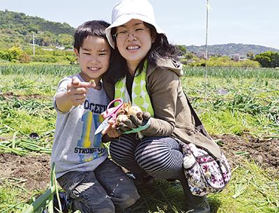 収穫祭で小田原玉ねぎPR