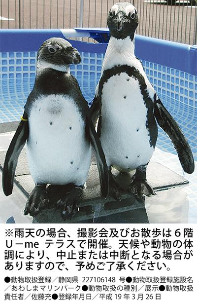 """ラスカに""""ペンギン""""!!"""