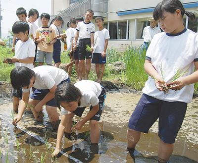校内に手作り水田