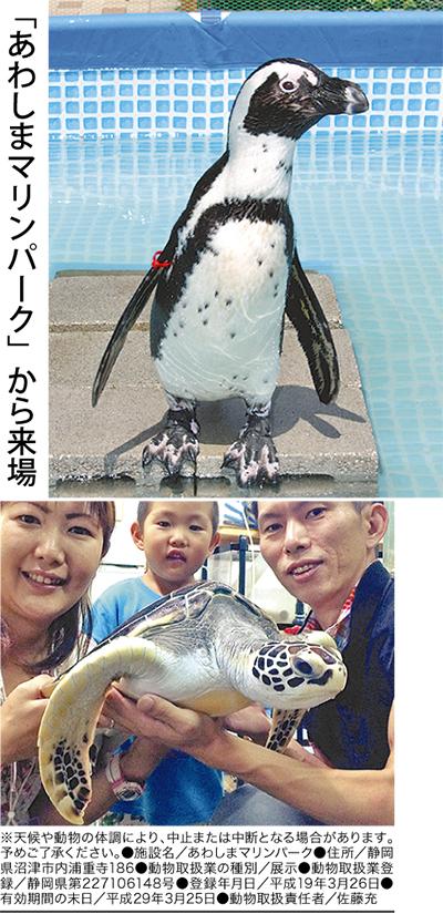 ペンギン&ウミガメ リターンズ