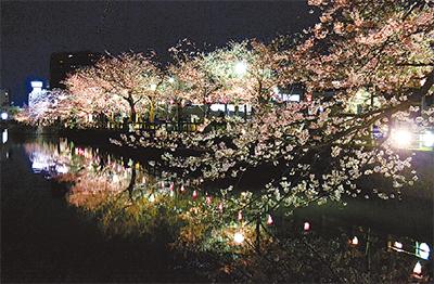 春の宵、桜に酔う