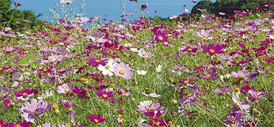 お花畑で摘み取り体験