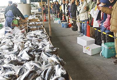 小田原漁港で正月支度