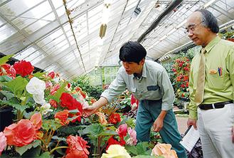 8年前からベゴニアを世話する鈴木伸幸さん(左)と野澤晃支配人(右)