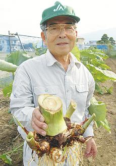 掘りたての弥一芋を手にする遠藤会長