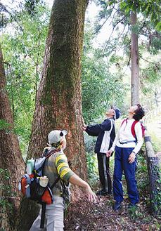 コースでは大木に触ることも