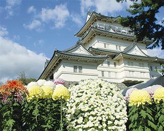 約700本の菊が会場を埋める
