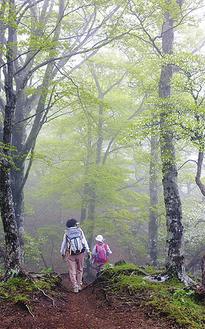 推薦作品 「霧の登山道」作者:碓井一海さん(南足柄市)