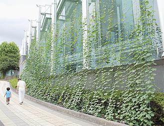 グリーンカーテンなどが設置される(写真は昨年の様子/南足柄市)
