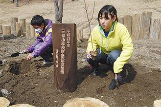 苗木を植える6年生