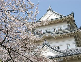 国内有数の桜の名所でもある小田原城