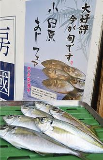 小田原近隣の鮮魚店では「あじフェア」開催中。ポスターでPR