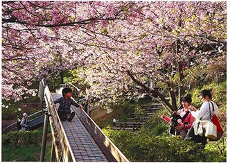 推薦作品「桜の頃」