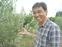 南足柄産オリーブを収穫