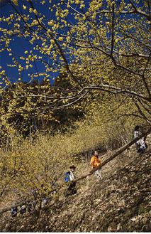 遠藤さんの作品「ろう梅に向って」