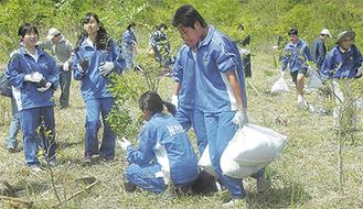 ブナの苗木を植える中学生たち =南足柄市狩川上流