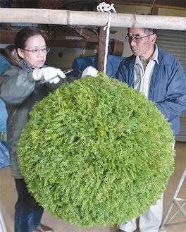 自宅で杉玉の仕上げをする川口和子さんと彪さん(14日)