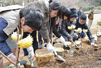 担任の佐藤博幸先生とミツマタを植える卒業生