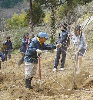 ロウバイを植える中学生と地域の人