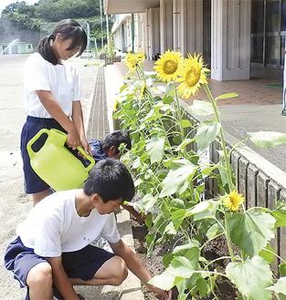 暑い中汗をかきながら世話に励む生徒=8月9日