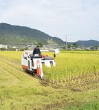 「はるみ」の刈り取り=19日・開成町金井島