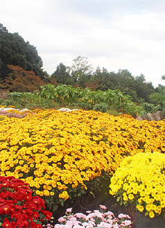 赤や黄色の花が咲く大雄町 =10月31日撮影