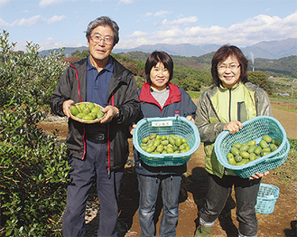 農業塾の研究ほ場で収穫されたフェイジョア =11月6日