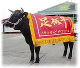 関東肉牛枝肉共進会で1等1席を受賞した初出荷の牛