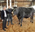 大野山の牛舎で育った牛 =大野山かどやファーム