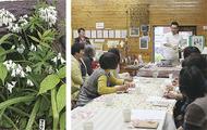 自然館の野草で仏料理