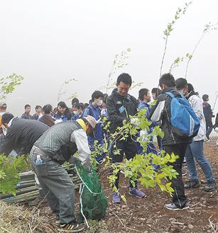 ブナの苗木を植える参加者