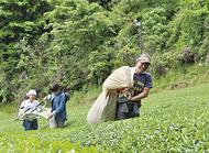茶畑再生を定住対策に