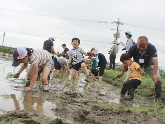 田植えに挑戦する参加者 =足柄紫水大橋そばの田んぼ