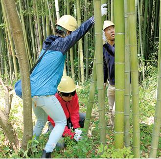 竹林整備を行う参加者=大井町提供