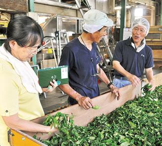 発酵前に茶葉をしおらせる萎凋(いちょう)と呼ばれる工程