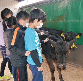 牛の背中をなでる小学3年生 =向田小学校