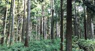 森林資産を有効活用