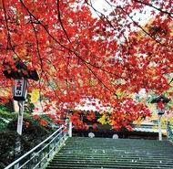 大雄山は秋真っ盛り