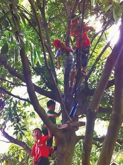 元気に木に登る子どもたち