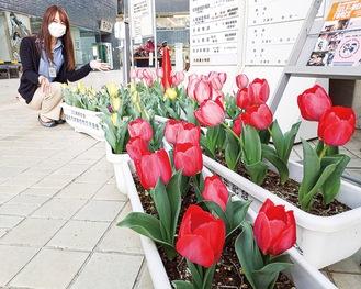 市役所の正面入り口を彩る花々(3月1日撮影)