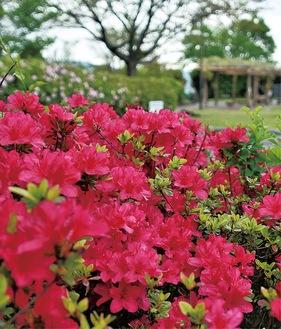 赤い花が目を引く園内(4月9日撮影)