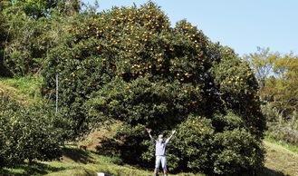 夏ミカンの巨木の前に立つ武井智さん
