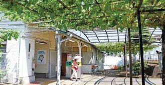 上大井駅舎裏に広がるひょうたん棚