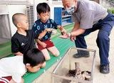 カブト虫を幼稚園へ