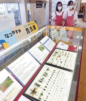 昆虫標本が並ぶ展示ブース