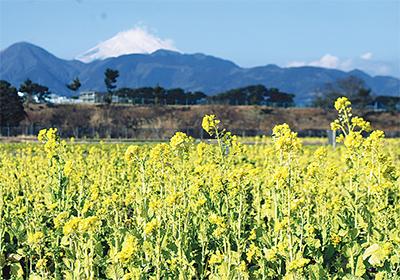 早くも咲き始めた黄色い花